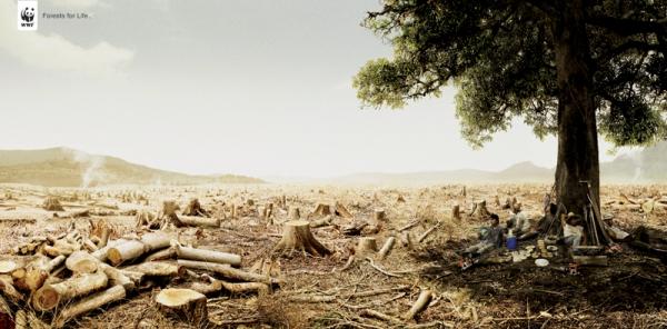 Tận diệt rừng ! và luật nhân quả